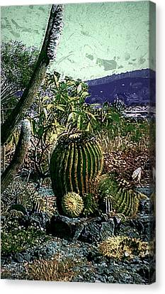Canvas Print featuring the photograph Cacti by Lori Seaman