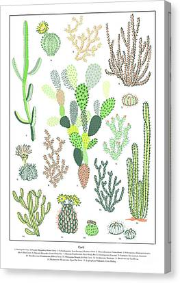 Cacti Varieties Canvas Print by Jacqueline Colley