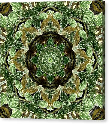 Cactus 1361k8 Canvas Print by Brian Gryphon
