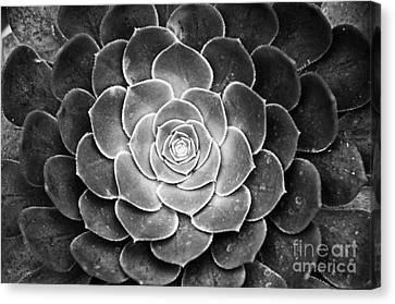 Cactus 18 Deep Bw Canvas Print