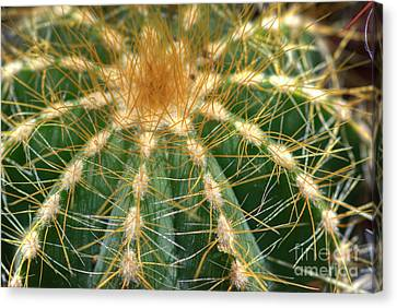 Canvas Print featuring the photograph Cactus 2 by Jim and Emily Bush