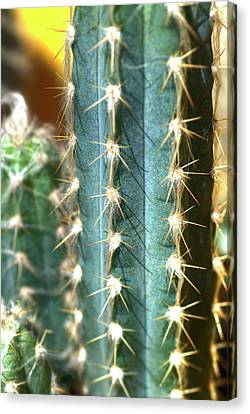 Canvas Print featuring the photograph Cactus 3 by Jim and Emily Bush