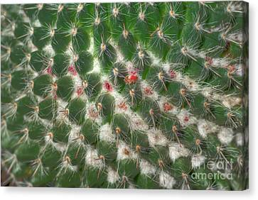 Canvas Print featuring the photograph Cactus 5 by Jim and Emily Bush