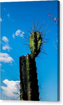 Cactus And Blue Sky 1 Canvas Print by Totto Ponce