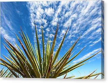 Cactus And Blue Sky Canvas Print by Amyn Nasser