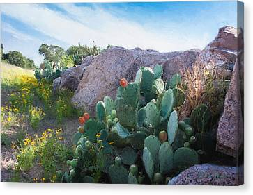 Cactus And Granite    9234 Canvas Print by Fritz Ozuna