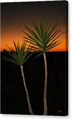 Cactus At Sunset Canvas Print by Julie Reyes