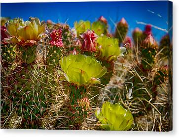 Canvas Print featuring the digital art Cactus At The End Of The Road by Bartz Johnson