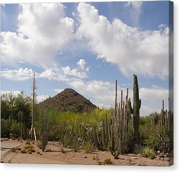Canvas Print featuring the photograph Cactus Country by Jeanette Oberholtzer