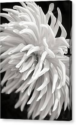 Cactus Dahlia Canvas Print