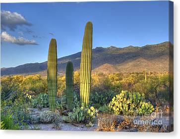 Cactus Desert Landscape Canvas Print by Juli Scalzi