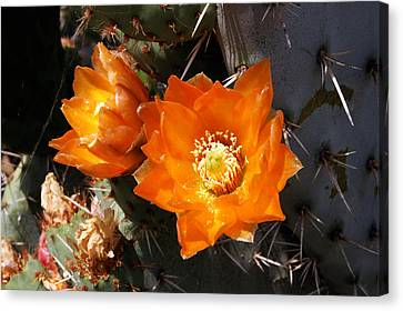 Canvas Print featuring the photograph Cactus Flower by Gary Brandes