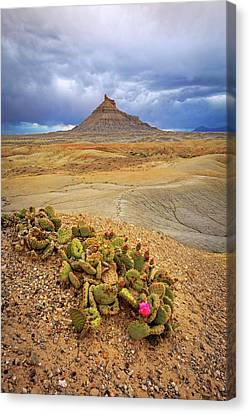 Cactus Flower In The Badlands. Canvas Print
