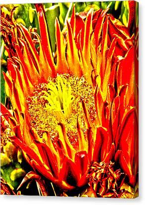 Cactus Flower Canvas Print by Judi Saunders