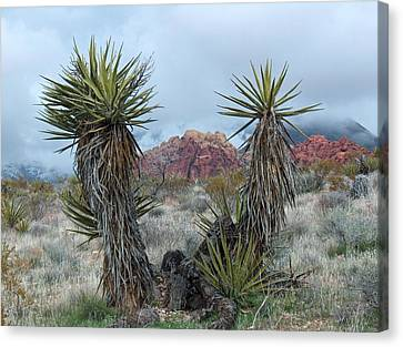 Cactus Frame Canvas Print