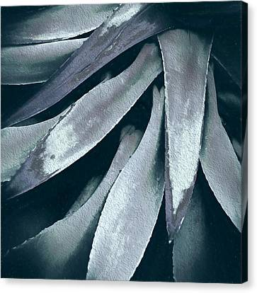 Canvas Print featuring the photograph Cactus In Blue And Grey by Julie Palencia