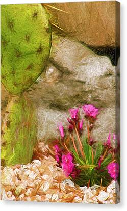 Cactus Lines Canvas Print by Terry Cork