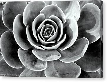 Cactus Ll Canvas Print