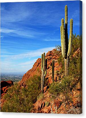 Cactus On Camelback 14x17 Canvas Print