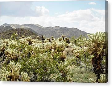Cactus Paradise Canvas Print by Amyn Nasser