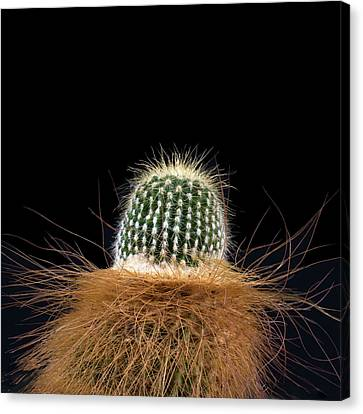 Canvas Print featuring the photograph Cactus Photo by Catherine Lau