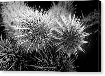 Canvas Print featuring the photograph Cactus Spines by Phyllis Denton