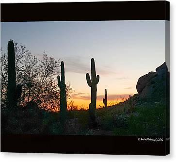 Cactus Sunset Canvas Print