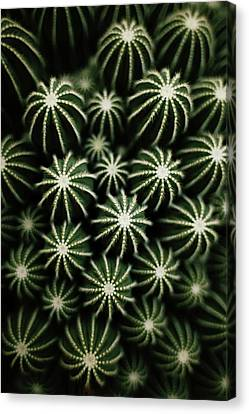 Cacti Canvas Print - Cactus by T*tomorrow