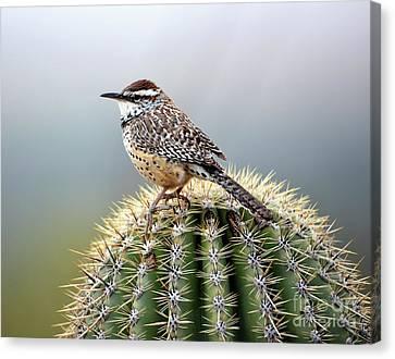 Cactus Wren On Saguaro Canvas Print