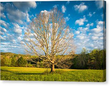 Cades Cove Great Smoky Mountains National Park Scenic Landscape Canvas Print by Dave Allen