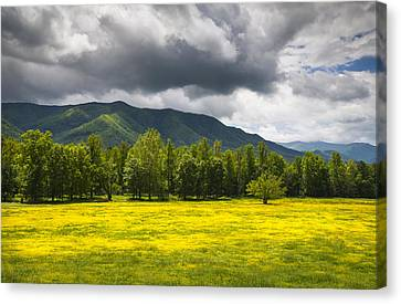 Cades Cove Great Smoky Mountains National Park Tn - Fields Of Gold Canvas Print by Dave Allen