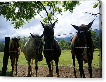 Cades Friends Canvas Print by Laurie Perry