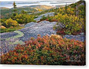 Cadillac Rock Garden Canvas Print by Susan Cole Kelly