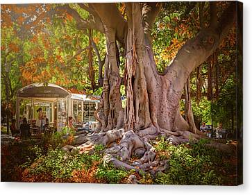 Cafe By The Grand Old Tree Lisbon Portugal Canvas Print