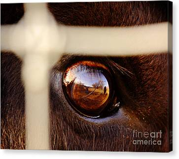 Caged Buffalo Reflects Canvas Print by Robert Frederick