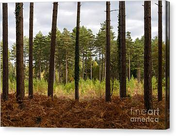 Caged In New Forest Canvas Print by Richard Thomas