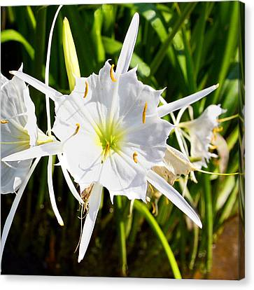 Cahaba Lily Canvas Print by Fred Baird