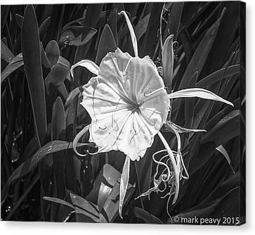 Cahaba Lily Canvas Print