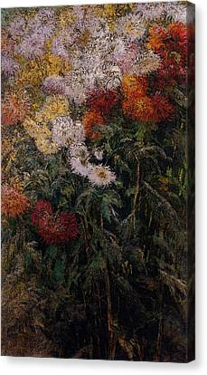 Gennevilliers Canvas Print - Caillebotte Gustave Clump Of Chrysanthemums Garden At Petit Gennevilliers by Gustave Caillebotte