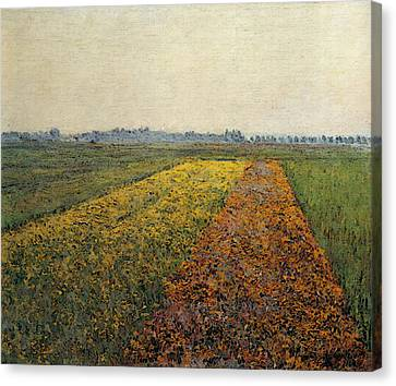 Gennevilliers Canvas Print - Caillebotte Gustave The Yellow Fields At Gennevilliers by Gustave Caillebotte