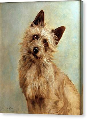 Cairn Terrier Painting Canvas Print by Allen Beilschmidt