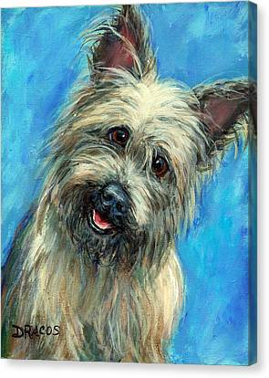 Cairn Terrier Smiling On Blue Canvas Print by Dottie Dracos