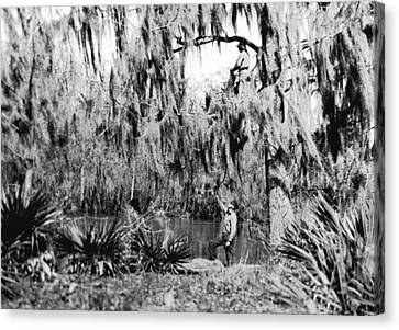 Cajuns Collecting Moss Canvas Print by Underwood Archives