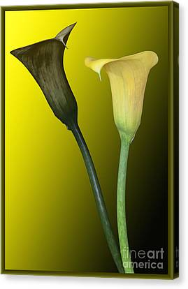 Cala Lilies Opposites Canvas Print