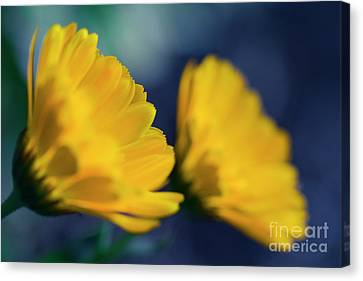 Canvas Print featuring the photograph Calendula Flowers by Sharon Mau
