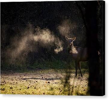 Canvas Print featuring the photograph Calf Elk In December by Michael Dougherty