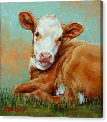 Calf Resting Canvas Print by Margaret Stockdale