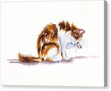 Calico Cat Washing Canvas Print