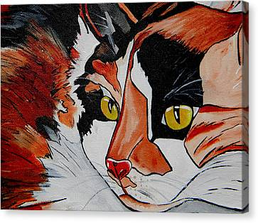 Calico Close Up Of Face Canvas Print by Patti Schermerhorn