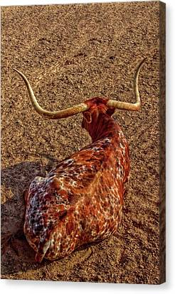 Calico Longhorn Canvas Print